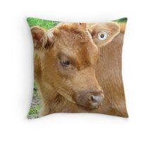 Poddy calf - Stokes' Farm , Kirkstall Throw Pillow