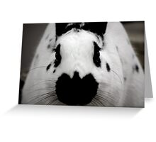 Black And White Bunny Greeting Card