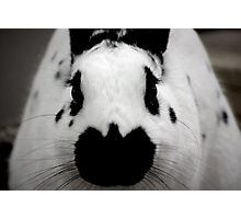 Black And White Bunny Photographic Print