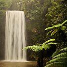 Milla Milla Falls - The Ferny Side by Ashleigh  Wall