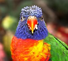 Lorikeet by Jo Nijenhuis