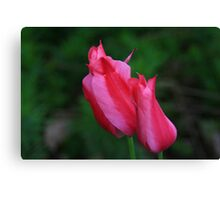 Pink TwoLips Canvas Print