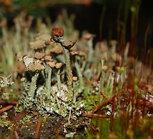 Miniature Ecosystems (2) by Barrie Daniels