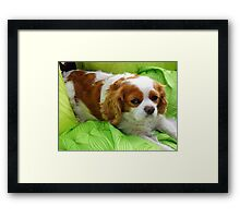 Life is just TOO too tough....zzzzzzz Framed Print