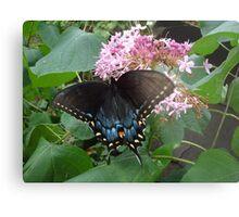 Black Eastern Swallowtail - Summer's End Metal Print