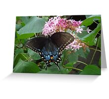 Black Eastern Swallowtail - Summer's End Greeting Card