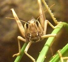 Desert Locust! by Michaela1991