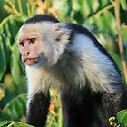 Capuchin in the jungle by cornishgirlie