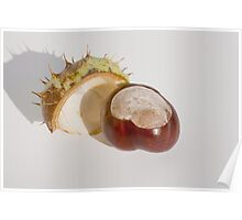 Chesnut Poster