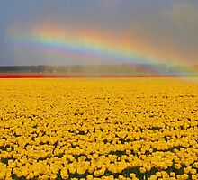 Rainbow & Tulips by Jo Nijenhuis