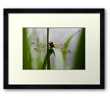 Dragonfly - Four-spotted Chaser Framed Print