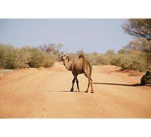 Camel near Chambers Pillar Northern Territory Photographic Print