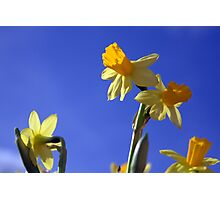 Spring in the Air Photographic Print