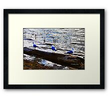 The Three Musketeers Framed Print