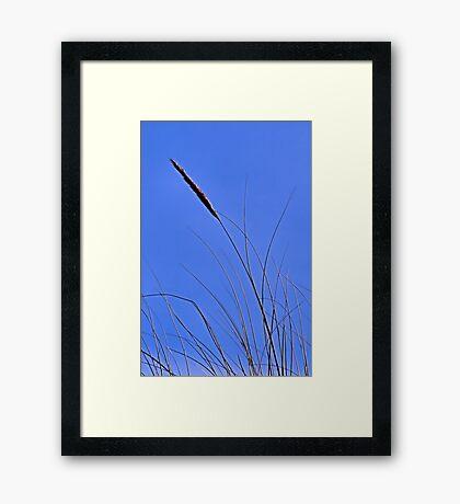 Summer Breeze Framed Print