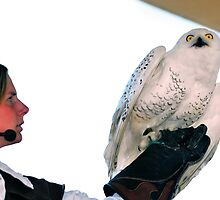 Snowy owl and trainer by neil harrison