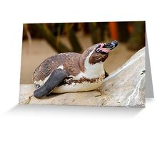 Humboldt penguin at Weymouth Sea Life Centre Greeting Card
