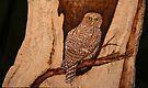 The Australian Powerful Owl by aussiebushstick