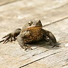 Toad by robspics