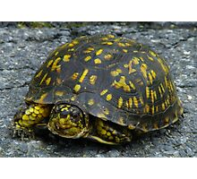 Behold The Turtle Photographic Print