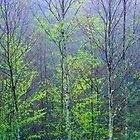 TREES,SPRING by Chuck Wickham