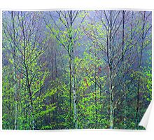 TREES,SPRING Poster