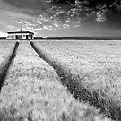 Ambonnay hut by Victor Pugatschew