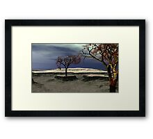 The Last Monkey Puzzle Trees Framed Print