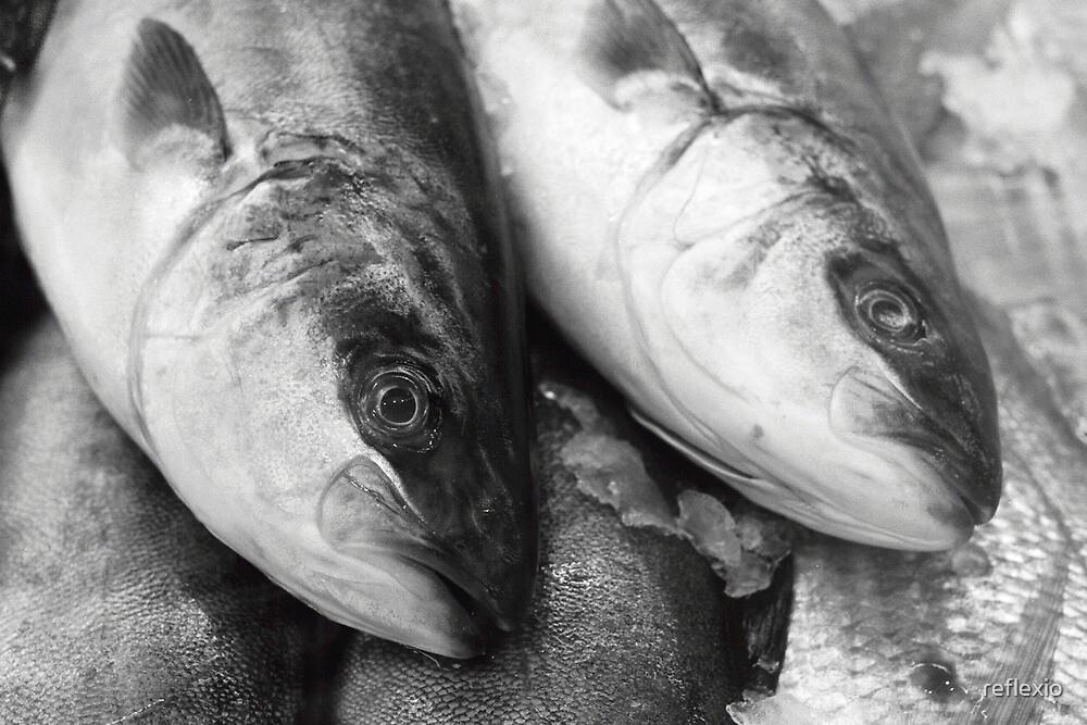 Fishy by reflexio