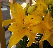 Yellow Lily On My Balcony by fchagora