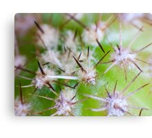 Super Macro of Cactus spines. Canvas Print