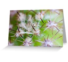Super Macro of Cactus spines. Greeting Card