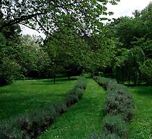 Green Path by Alessandro Fraracci