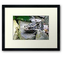 King Croaker Framed Print