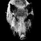 Boar by Andreas  Berheide
