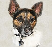 Jack the Jack Russel by Sarahbob