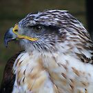Falcon # 2 by Hovis