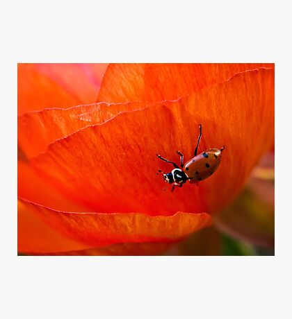 It's a ladybug world Photographic Print