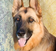 German Shepherd - Honey by Sarahbob
