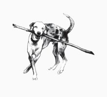 Catahoula Leopard Dog, b&w by Acey Thompson