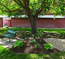 Maple Tree And Park Bench by Paul Budge