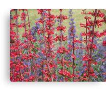 Red & Purple Canvas Print