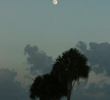 Moon over Miami by Brenda Dow