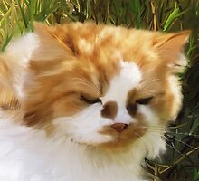 Long Haired Ginger Cat - Lucy by Sarahbob