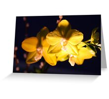 Yellow Orchids In The Dark Greeting Card