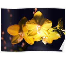 Yellow Orchids In The Dark Poster