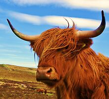 Standing Guard - Highland Cow by caledoniadreamn