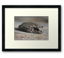 Frog Resting Framed Print
