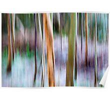 Winter Trees - Killarney National Park Poster