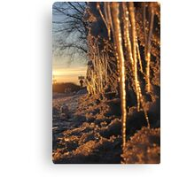 Cup and Icicles Canvas Print